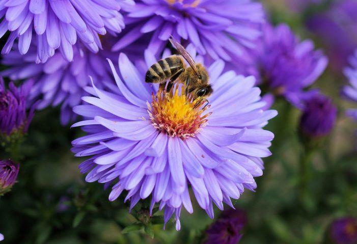 T-Systems setzt auf fleisige Bienen für intelligente Logistik