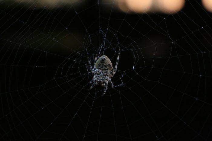 Malware-as-a-Service aus dem Dark-Net