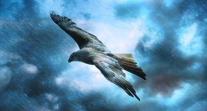 Flug auf Sicht in der Cloud