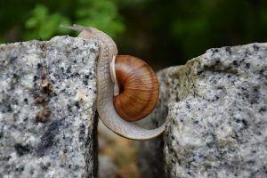 snail-1447233_640