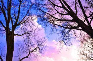 CISOs schweben nicht auf rosaroten Wolken