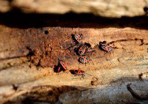 5 Best-Practices gegen hartnäckige Schädlinge